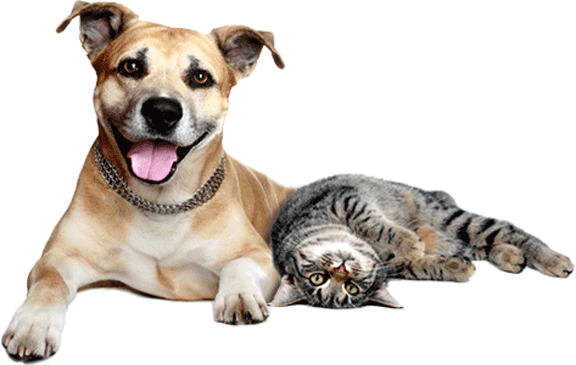Insurance for cat and dogs